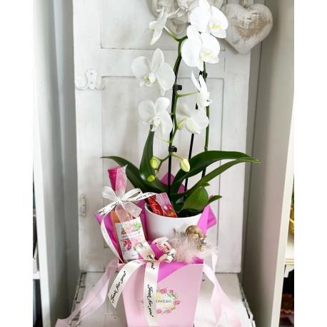 Подаръчен комплект вино и орхидея