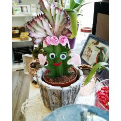Весели кактуси -интересен подарък