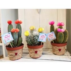 Любовни  кактуси